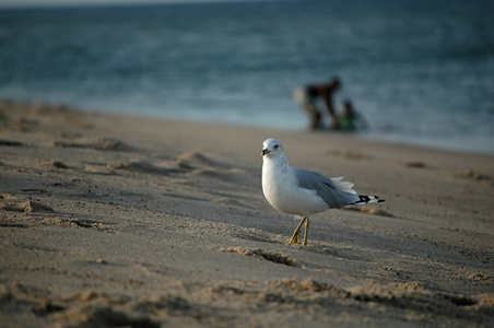 http://gallery.sabine-heller.com/files/gimgs/1_coastguardbeach09smallhomepage.jpg